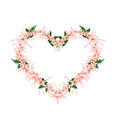 Clerodendrum Paniculatum Flowers in Heart Shape vector image vector image