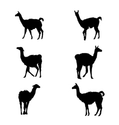 Collection of guanaco silhouettes vector image