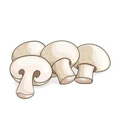 White champignon mushrooms vector image vector image