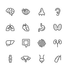 visceral and anatomy icons line icons set vector image
