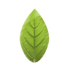 Drawing green leaves natural vector