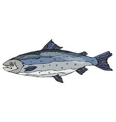 Image of atlantic salmon red fish realistic vector