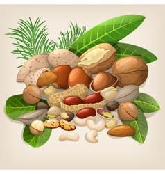 Nut collection with raw food mix vector