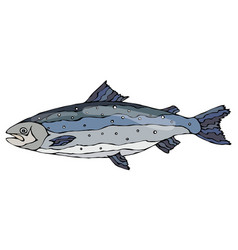 image of atlantic salmon red fish realistic vector image vector image