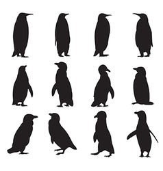 Collection of penguins silhouettes vector