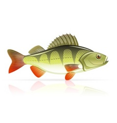 perch vector image