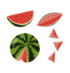 Ed fruit watermelon vector