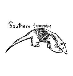 southern tamandua vector image vector image