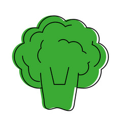 broccoli vegetable icon image vector image