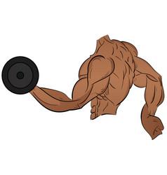 bodybuilder doing exercises with dumbbells vector image
