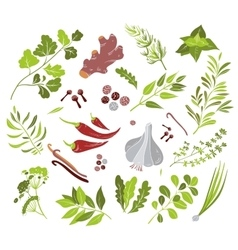 Different herbs and spices vector