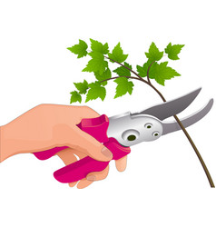 the hand holds the pruner vector image