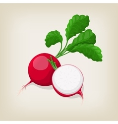 Whole and half radishes with leaves vector