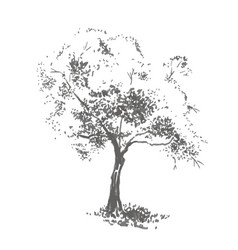 Hand-drawn aple tree realistic image in shades of vector