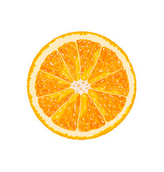 Orange slice of citrus vector