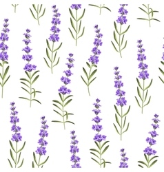 Seamless pattern of lavender flowers vector image