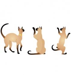 Siamese cats vector