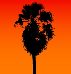Sugar palm silhouette vector image vector image