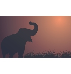 Landscape elephant in fields silhouettes vector