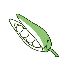 Peas fresh vegetable vector