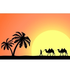 Man on the camel in palm trees at sunset vector