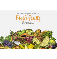 vintage hand drawn fresh fruits background vector image vector image