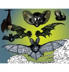 bats wings vector image