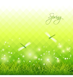 Green grass dragonfly season background vector