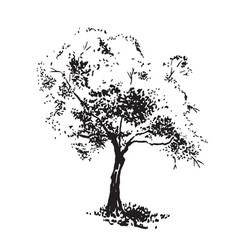 Hand-drawn aple tree black and white realistic vector