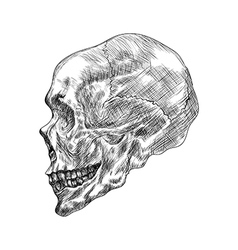 Sketch of profile human skull hand drawing in vector