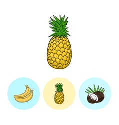 Fruit icons pineapple banana coconut vector