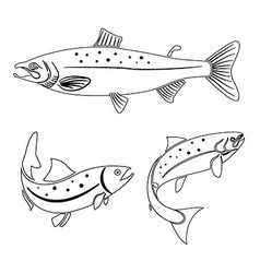 salmon label design element vector image