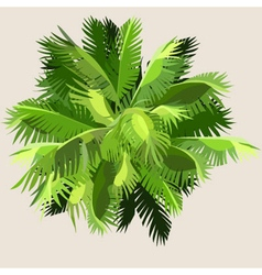 painted palm leaves gathered into a ball vector image