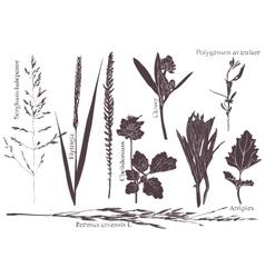 Set leaf meadow grass vector