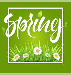 Spring frame green grass and daisies vector