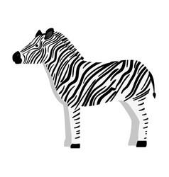 wild zebra isolated icon vector image
