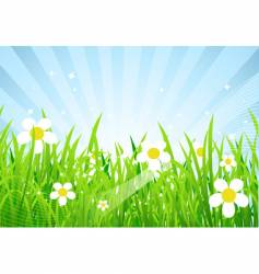 Spring meadow beautiful vector