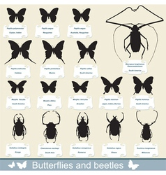 Beetles and butterflies vector