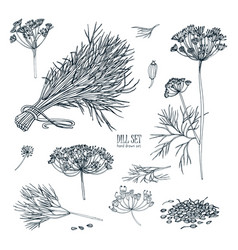 Dill set hand drawn sketch collection with greens vector