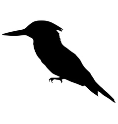 Black silhouette of kingfisher vector