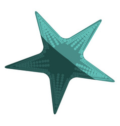 white background with aquamarine starfish vector image