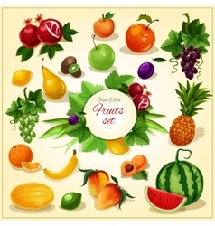 Ripe fruit with leaves cartoon poster vector image