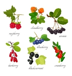 Set of berries with leaves botanical vector image vector image