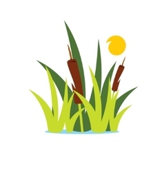 Reed and sedge cartoon vector