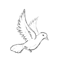 Dove icon bird and peace design graphic vector