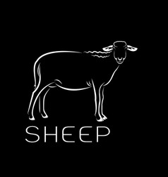 Sheep on black background farm animals vector