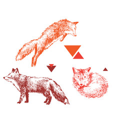 3 hand drawn foxes in different poses vector image vector image