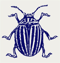 Beetle leptinotarsa decemlineata vector