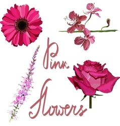 Isolated pink flowers set vector image