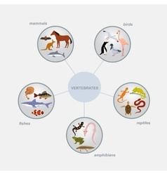 Vertebrates classification infographics vector